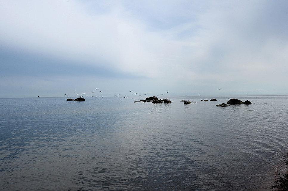 Место гнездования чаек рядом с островом Большой Тютерс