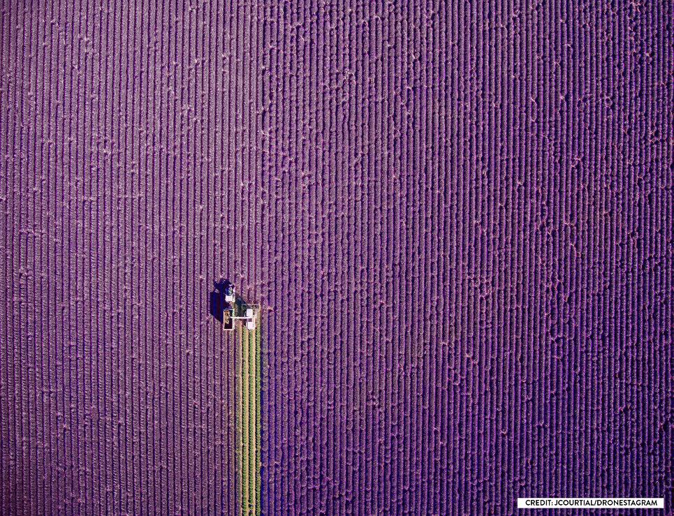Фотография Provence, summer trim, занявшая первое место в номинации Природа