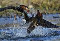 Работа фотографа  Юрия Смитюк Два мандарина, занявшая первое место в категории Анималистика. Профессионалы на ежегодном фотоконкурсе компании Nikon Я | В СЕРДЦЕ ИЗОБРАЖЕНИЯ