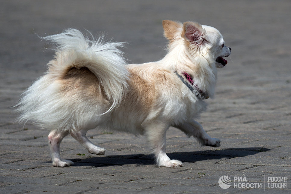 Участник фестиваля собак и людей Спутники жизни в Измайловском Парке культуры и отдыха в Москве