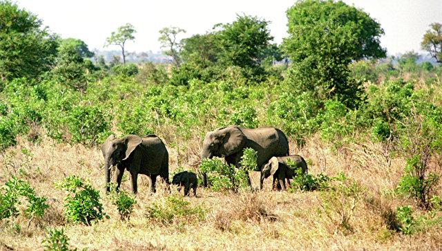 слон убил испанского туриста