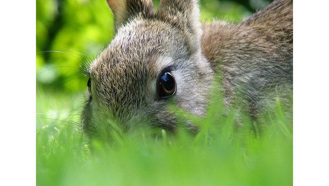 Деловые люди изАйовы подали всуд наUnited Airlines из-за погибшего кролика