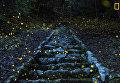 Работа фотографа Yutaka Takafuj Forest of the Fairy, получившая поощрительный приз в категории Природа в фотоконкурсе 2017 National Geographic Travel Photographer of the Year