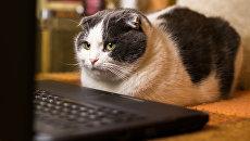 Кот за компьютером. Архивное фото