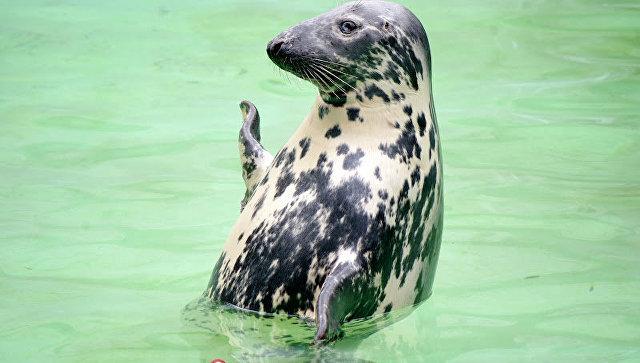 Калининградский зоопарк впервые выпустит в природу балтийских тюленей