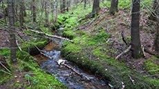 Лесной ручей в Архангельской области