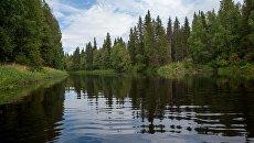 Река Илекса в Водлозерском национальном парке в Архангельской области. Архивное фото