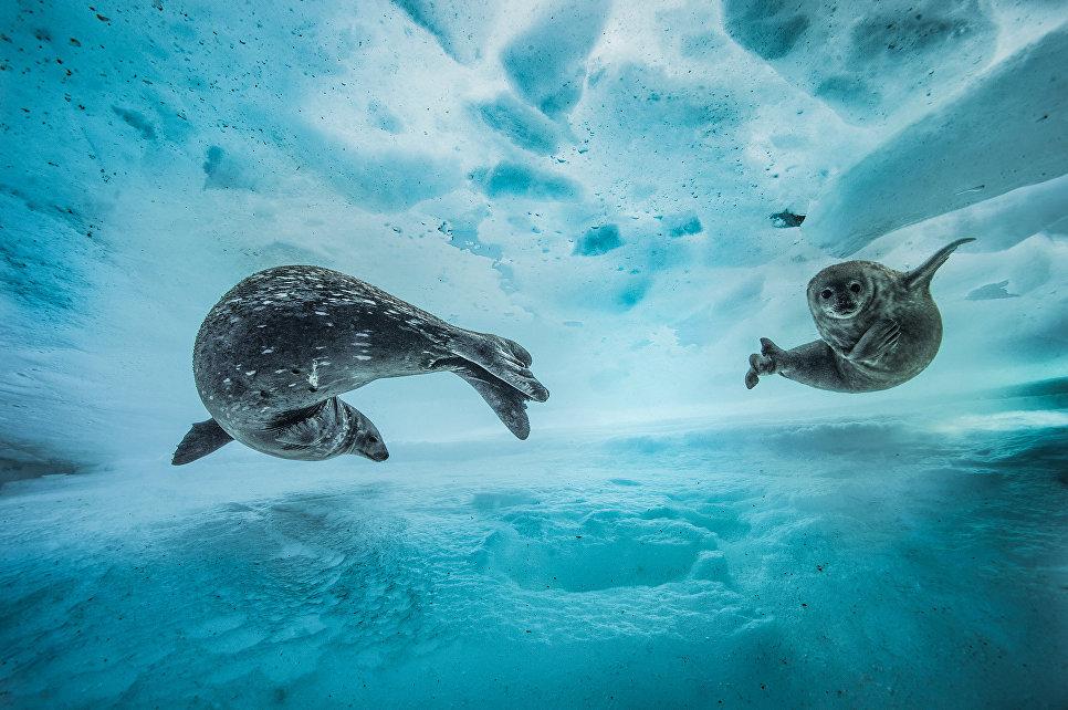 Работа фотографа из Франции Laurent Ballesta Swim gym в категории Поведение: Млекопитающие в финале конкурса Wildlife Photographer of the Year 2017