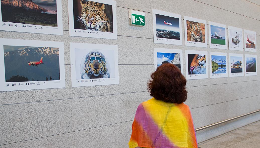 Выставка Россия заповедная открылась в аэропорту Внуково