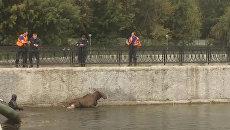 Сотрудники МЧС спасли лося, тонувшего в пруду на юго-востоке Москвы