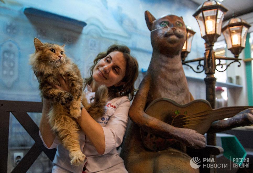 Ветеринарный врач Эрмитажа Анна Кондратьева с эрмитажным котом в котокафе Республика кошек