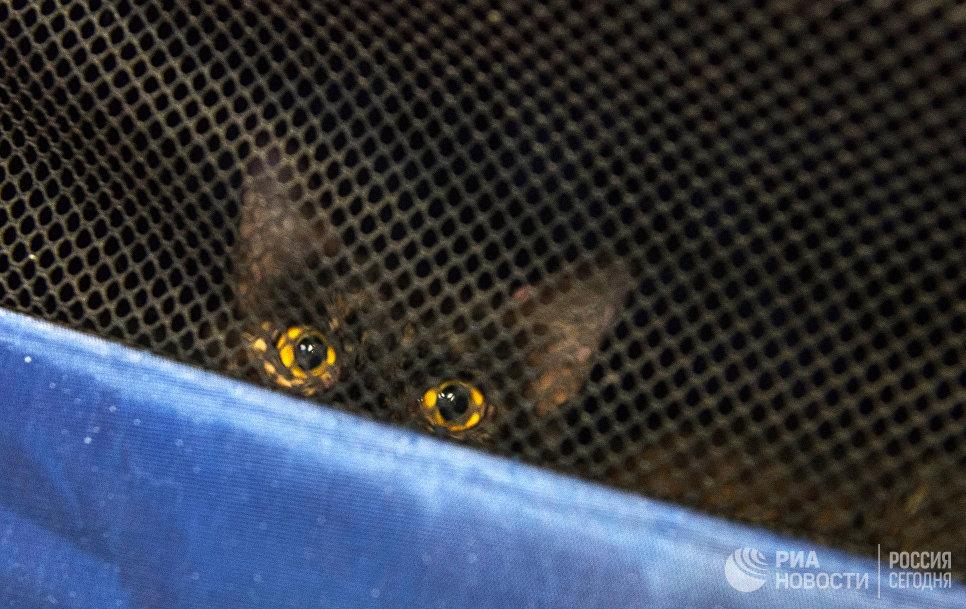 Эрмитажный кот в переноске в котокафе Республика кошек, в котором ежемесячно проходят благотворительные акции Все оттенки кошачьего по раздаче кошек в добрые руки