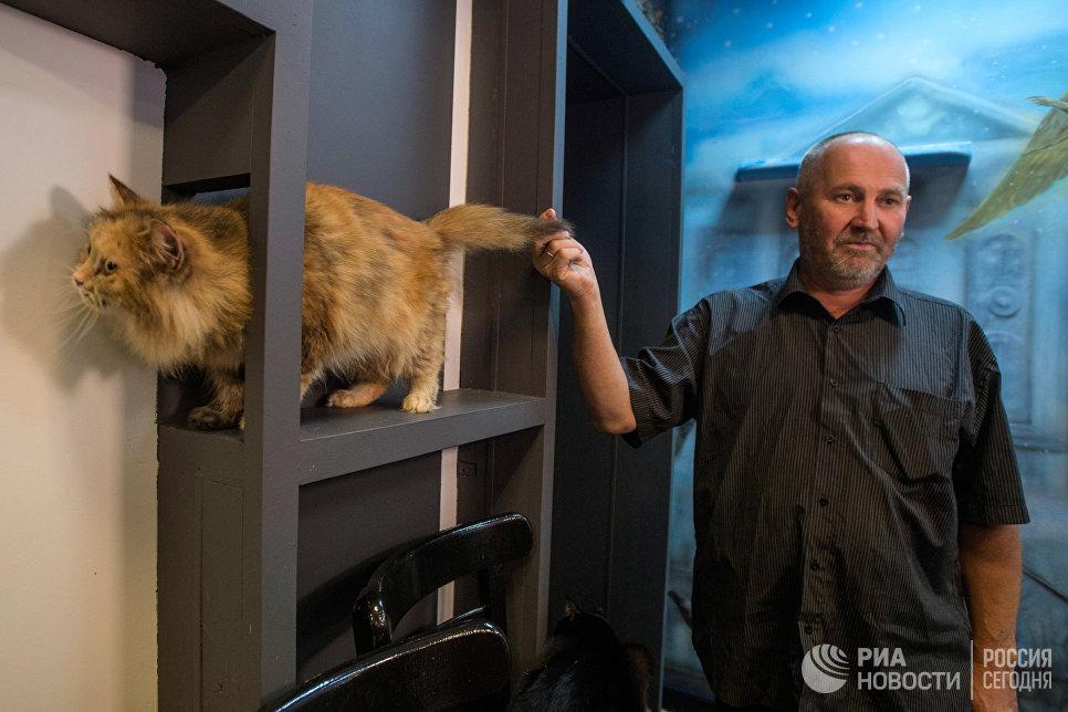 в котокафе Республика кошек, в котором ежемесячно проходят благотворительные акции Все оттенки кошачьего по раздаче кошек не только из Эрмитажа, но и из городских приютов в добрые руки