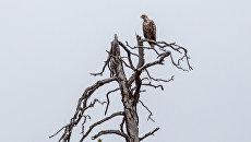 В Мордовском заповеднике обнаружили гнезда редких птиц