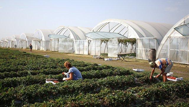 Фермерское хозяйство. Архивное фото