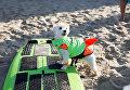 Участник турнира по собачьему серфингу Surf City Surf Dog на пляже Хантингтон-Бич, Калифорния. 23 сентября 2017 года