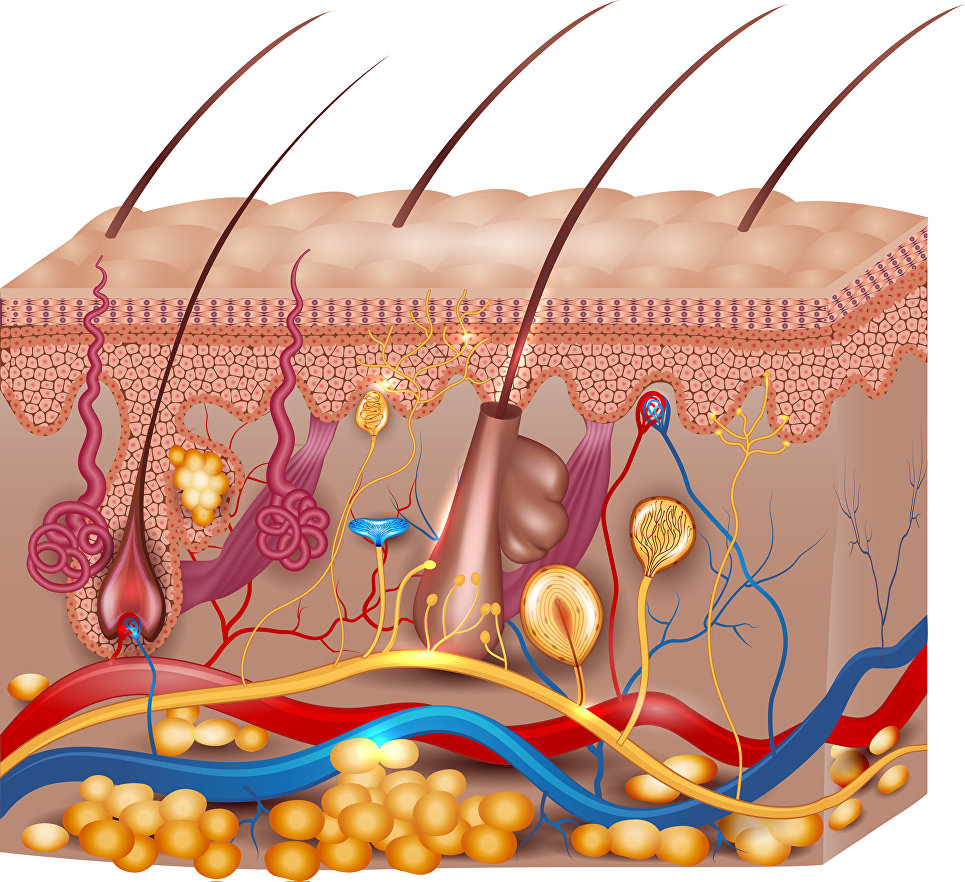 Волосы бывают кудрявыми из-за строения белков— медсотрудники
