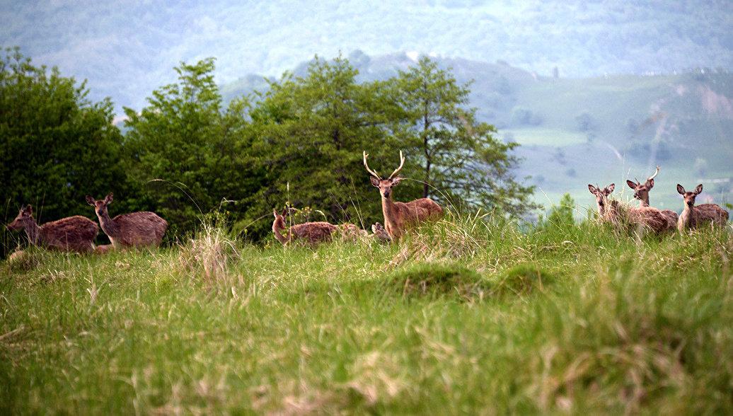 В Ростовской области выпустили в дикую природу 14 оленей и 7 ланей