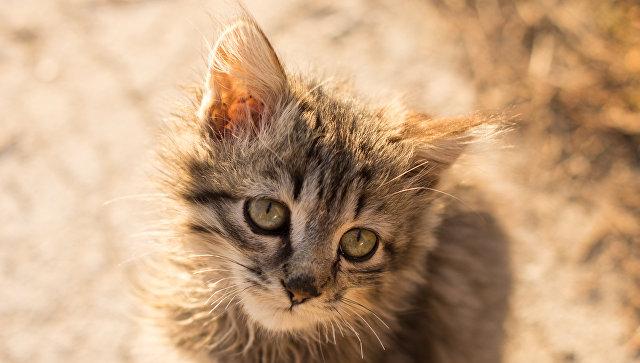 Заубийство кота екатеринбуржцу угрожает тюремный срок