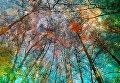 Yuri Pritisk. Touch Of Autumn