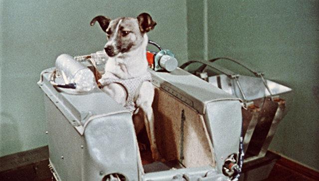 Ученые пояснили, почему вкосмос полетела первой именно бездомная собачка Лайка