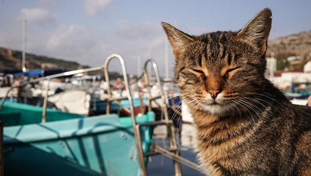 Кот на пирсе города Балаклавы в Крыму