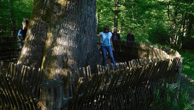 СудЕС обещает оштрафовать Польшу завырубку Беловежской пущи