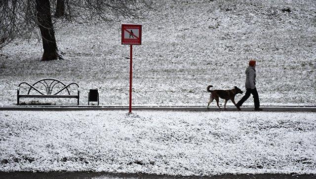 Российскую столицу вначале рабочей недели ждет сильный снегопад
