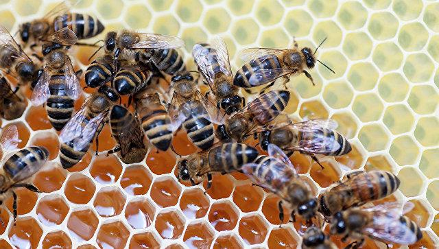 Амурские пчеловоды будут поставлять мед в сетевые московские магазины