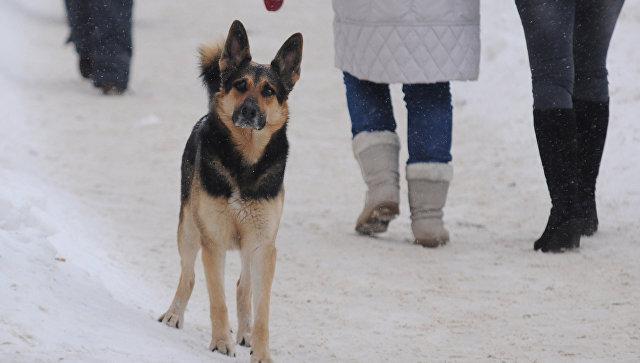 Бездомный пес. Архивное