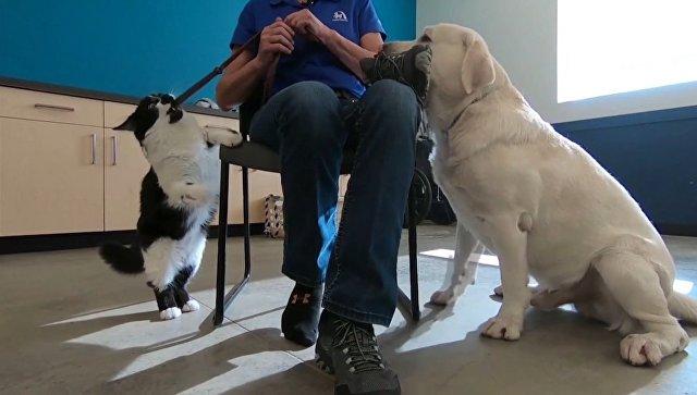 Кот Собака «тренирует» псов для людей с ограниченными возможностями здоровья