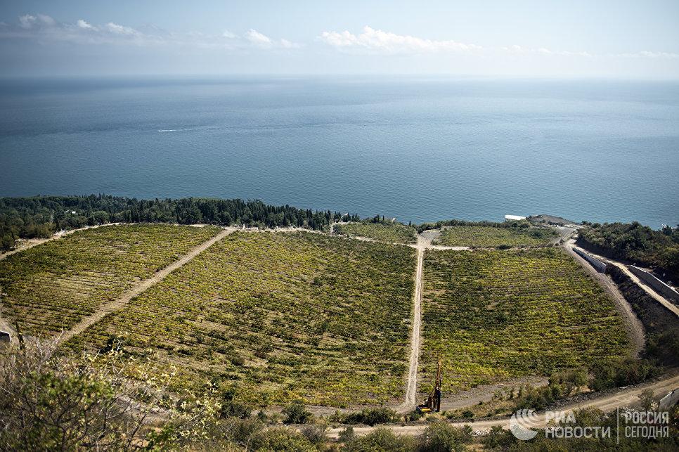 Виноградники объединения тянутся на 180 км от Фороса до Судака. Это более 1,5 тысяч участков, каждый из которых имеет свои особенности - структуру почвы, микроклимат, уклон, высоту (от 10 до 270 м над уровнем моря).