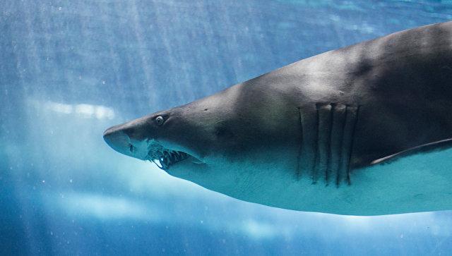 В Мексике туши 300 акул нашли на шоссе