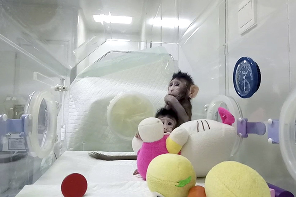 Обезьянки Чжун Чжун и Хуа Хуа