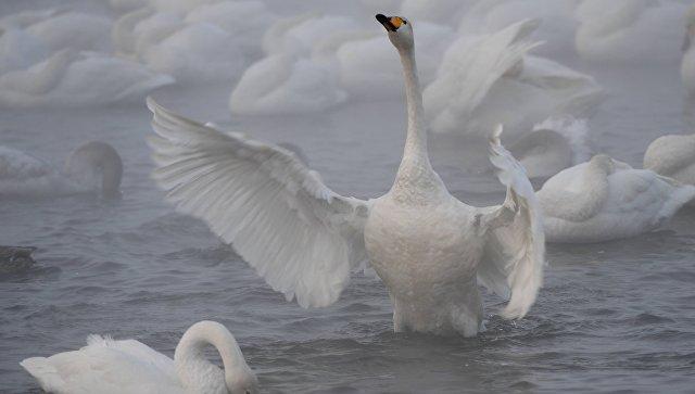 Государственный природный комплексный заказник Лебединый