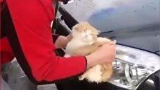 Житель Кубани помыл машину котом из мести