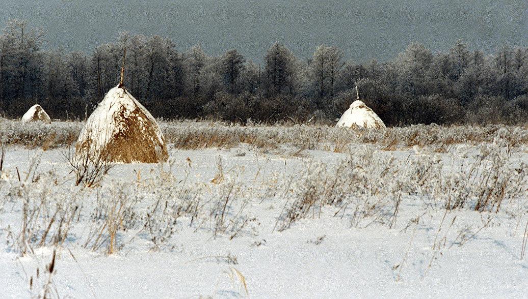 Памятник природы Дубки появится в 2018 году под Рязанью