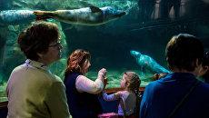 РГО запустило образовательный проект для юных океанологов