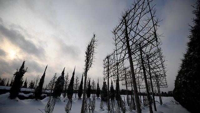 Питомник по выращиванию деревьев для благоустройства Москвы