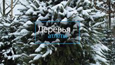 Деревья-Атлеты