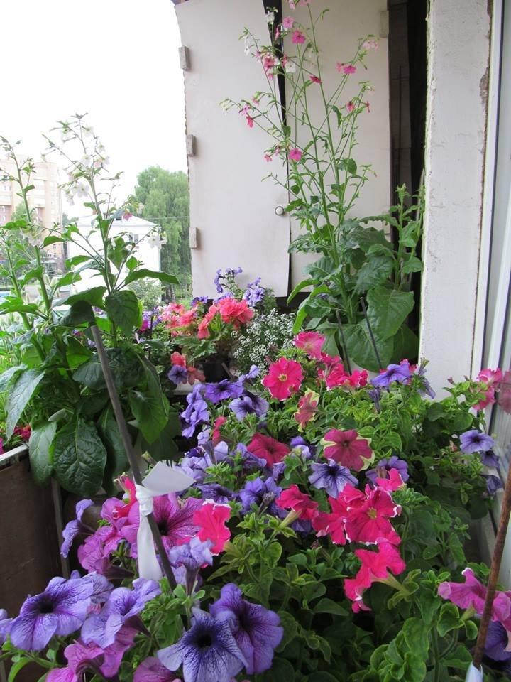 Расти петрушка большая и маленькая: как создать домашний огород в квартире