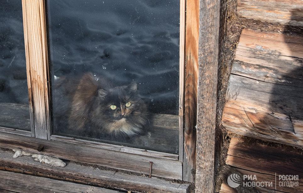 Кот в доме Агафьи Лыковой.