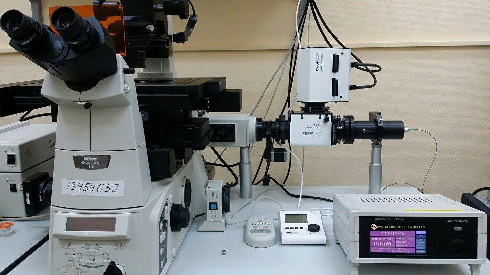 """""""Горячие точки"""". Зачем ученые измеряют температуру живой клетки"""