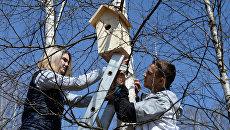 Молодые люди вешают скворечник на дерево. Архивное фото