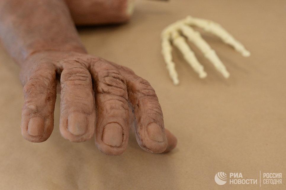 Скульптурная реконструкция рукиHomo naledi