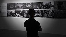 Посетитель на выставке победителей и призеров Международного конкурса фотожурналистики имени Андрея Стенина. Архивное фото