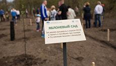 Посадка деревьев в яблоневом саду в память о жертвах трагедии в Кемерово. 30 апреля 2018
