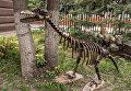 Велоцираптор. Экспонат парка-музея металлических скульптур СГТУ имени Гагарина Ю.А.