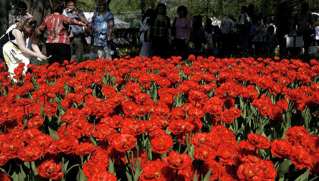 Фестиваль тюльпанов. Архивное фото