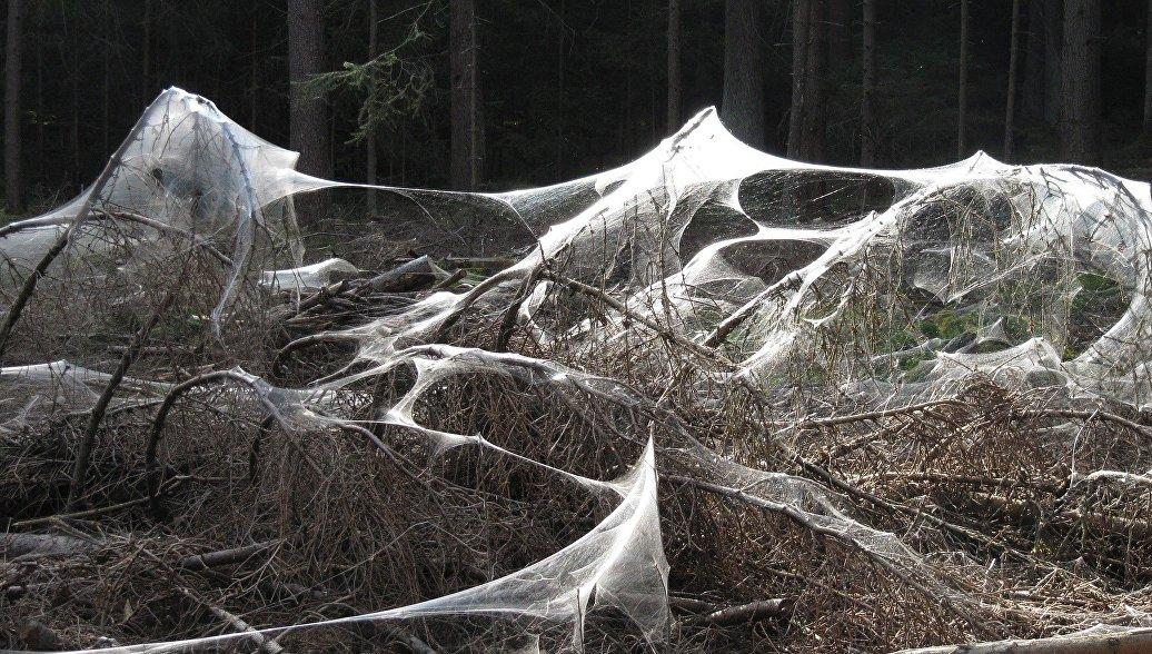 Лес в Англии стал похож на кадры из фильма ужасов